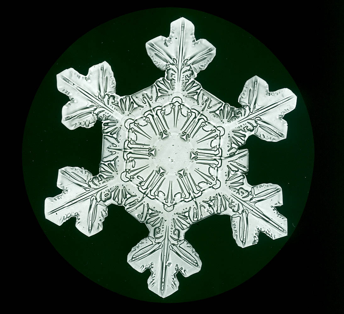 Snowflakes: The Extraordinary Micro Photographs Of Winter
